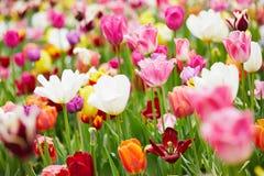 与许多五颜六色的花的背景 库存照片