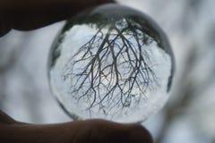 与许多分支和枝杈的一棵干燥树在一个水晶球 库存照片