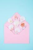 与许多扇贝壳的桃红色信封在后面色的薄荷的蓝色 免版税图库摄影