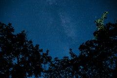与许多星的蓝色黑暗的夜空在树上的领域 库存图片