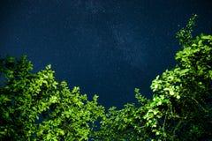 与许多星的蓝色黑暗的夜空在树上的领域 免版税库存照片
