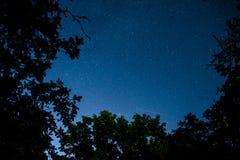 与许多星的蓝色黑暗的夜空在树上的领域 免版税库存图片