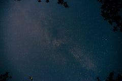 与许多星的蓝色黑暗的夜空在树上的领域 库存照片