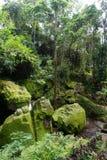与许多植物的非常密林绿色在巴厘岛印度尼西亚 图库摄影