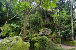 与许多植物的非常密林绿色在巴厘岛印度尼西亚 库存图片