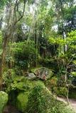 与许多植物的非常密林绿色在巴厘岛印度尼西亚 免版税库存照片