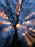 与许多灯的树 库存图片