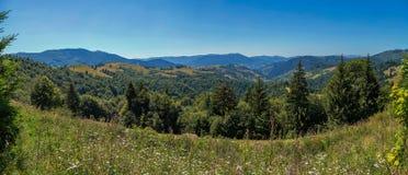 与许多的一个平缓坡度以高绿色山脉为背景的美妙的野花 免版税库存照片