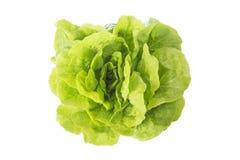 与许多的新鲜的莴苣绿色在自然设置离开在白色背景 库存图片