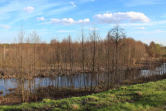 与许多的春天风景桤木和池塘分支  免版税图库摄影