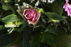 与许多的桃红色玫瑰离开 库存照片