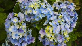 与许多的花颜色在庭院里 免版税库存照片