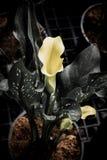 与许多的水芋百合离开作为花卉背景 免版税库存图片