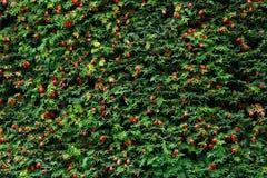 与许多的Noel结构树对此的果子 免版税库存照片