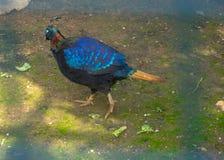 与许多颜色的一只美丽的鸟 免版税库存图片