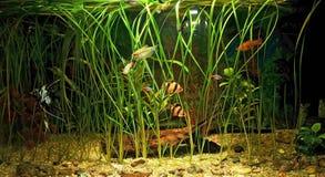 与许多鱼和自然工厂的水族馆.120升 免版税图库摄影