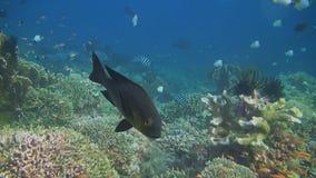 与许多鱼的五颜六色的珊瑚礁 影视素材