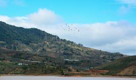 与许多鸟的山场面在Khanh Hoa,越南 图库摄影
