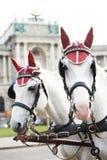 与设备的二匹马 免版税库存图片