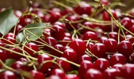 与词根和叶子,莓果伯根地背景的成熟樱桃 免版税库存图片