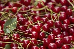 与词根和叶子,莓果伯根地背景的成熟樱桃 库存照片