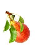 与词根和绿色叶子的唯一梨。 查出。 免版税库存照片