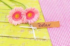 与词的礼品券放松并且变粉红色大丁草雏菊花 免版税库存照片