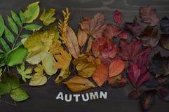 与词秋天的五颜六色的秋叶 库存照片