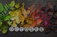 与词10月的五颜六色的秋叶 免版税库存图片