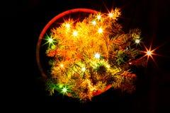 与诗歌选的小圣诞树在罐 黑色背景 图库摄影