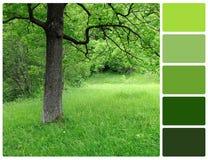 与调色板颜色样片的春天树 免版税库存图片