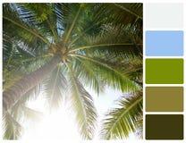 与调色板颜色样片的棕榈树 免版税库存图片