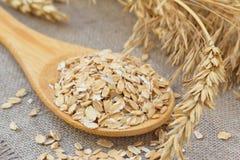 与谷物的耳朵的燕麦 免版税库存图片