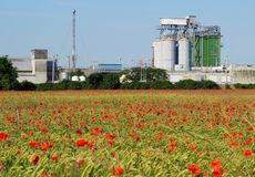 与谷粮仓的农业大厦和在一块大麦田后的干燥塔与很多红色鸦片 库存照片