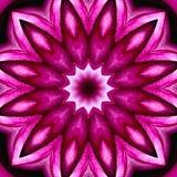 与象水彩的纹理的开花的桃红色无缝的抽象背景 库存照片