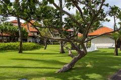 与豪华的植被的安静的村庄车道在巴厘岛 免版税图库摄影