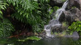与豪华的植被的小瀑布 影视素材