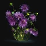与豪华的紫色翠菊花束的静物画在一个玻璃水罐的用清楚的水,点燃由光,在黑背景, squa 图库摄影