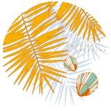 与贝壳、棕榈叶和阴影的圆的海构成 库存例证