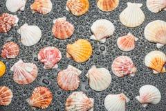 与贝壳的黑色背景 免版税库存图片