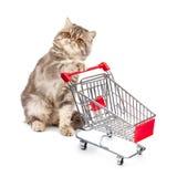 与购物车的猫 免版税库存照片