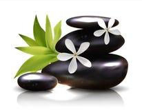 与赤素馨花花传染媒介的温泉石头 向量例证