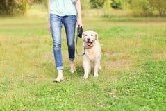 与走在公园的金毛猎犬狗的所有者 库存图片