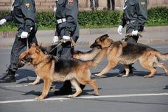 与走在街道上的狗的警察 免版税库存照片