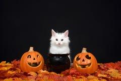 与起重器o灯笼和大锅的白色万圣夜小猫 免版税库存照片