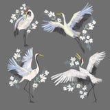 与起重机鸟的刺绣 时尚装饰 皇族释放例证