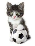 与足球的小猫 免版税库存照片
