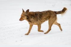 与跑在一条多雪的街道上的伤痕的混杂品种狗在冬天季节 库存照片