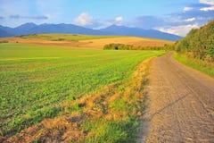 与路和草地的美好的农村风景 免版税库存照片