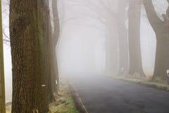 与路在雾-易北河的德国Elbtalaue国家公园的树大道 图库摄影